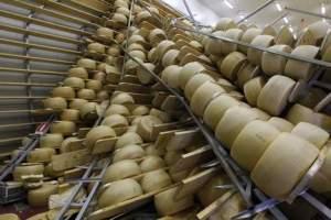 parmesan cheese 1